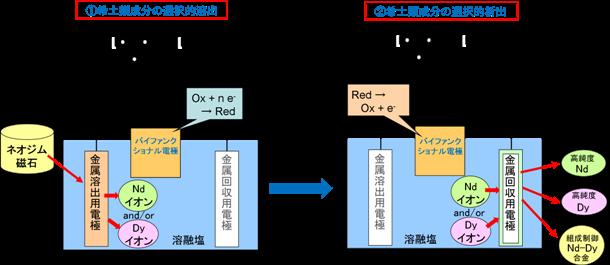 バイファンクショナル電極の模式図